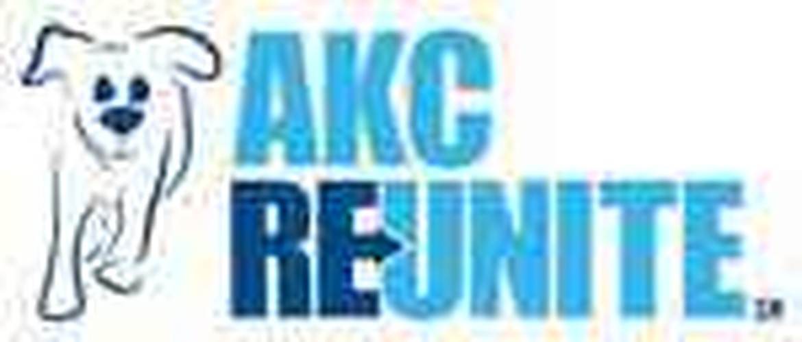 AKC enrolled puppies and dogs for sale American Dog Club